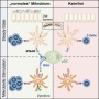 The Microbiome Controls Immune System Fitness | Charité - Universitätsmedizin Berlin