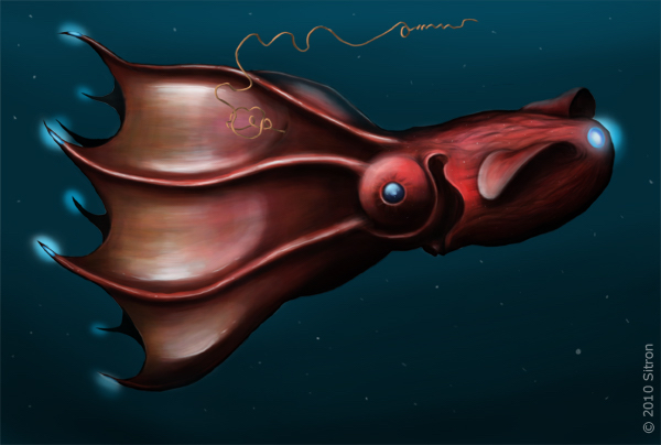 Adult vampire squid (Vampyroteuthis infernalis) © Citron CC BY-SA 3.0